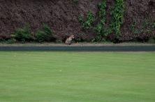 A keen spectator